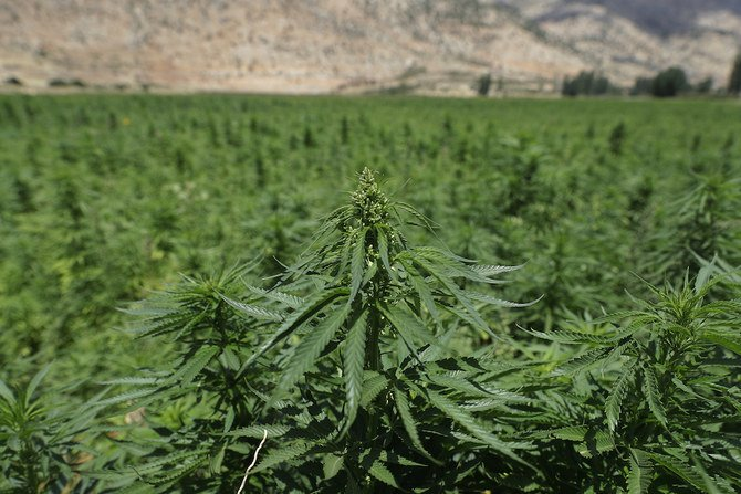 Can cannabis legalization rescue Lebanon's ailing economy?